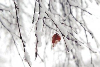 В нескольких районах Башкирии выпал первый снег