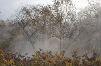 В Башкирии прогнозируют сильный ветер, туман, гололедицу и ночные заморозки